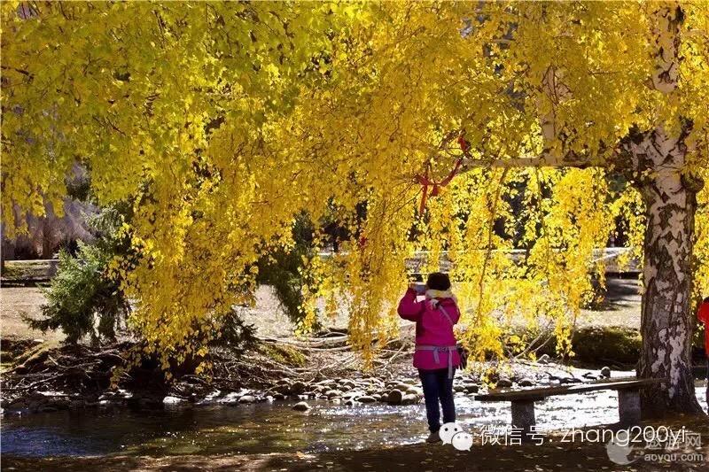 金色秋天到新疆看美丽的风景