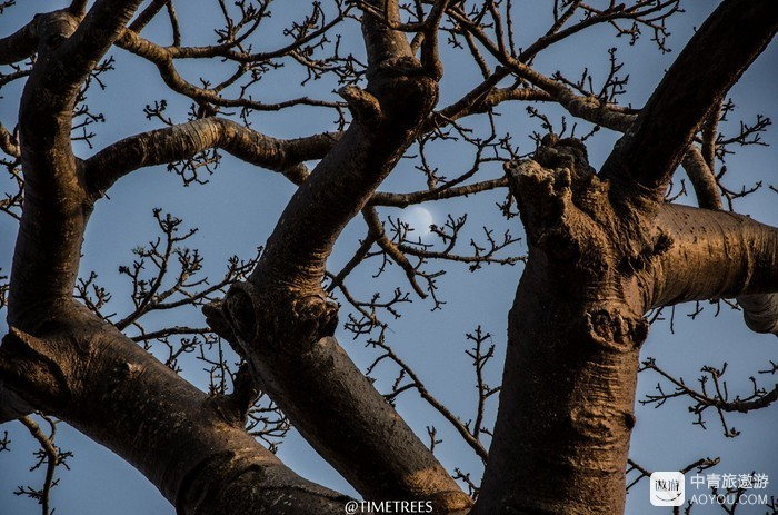 生长猴面包树的土地