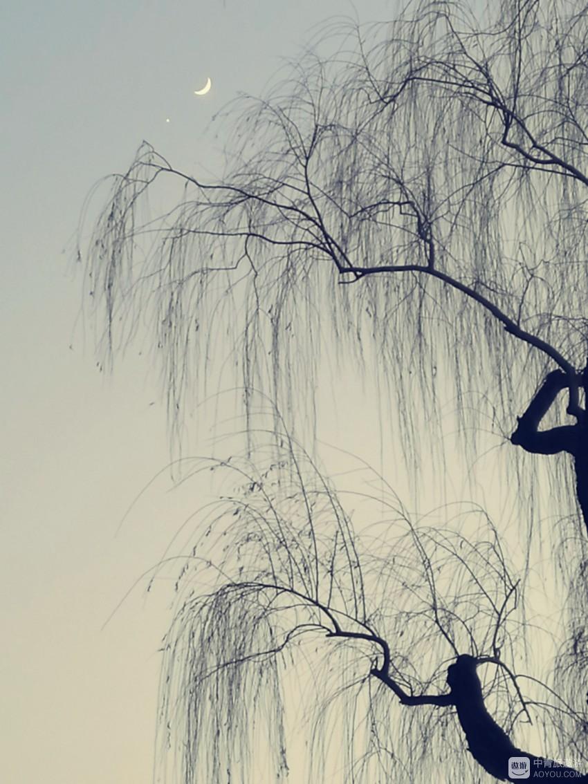 鸳鸯,是玉渊潭公园今年的主题
