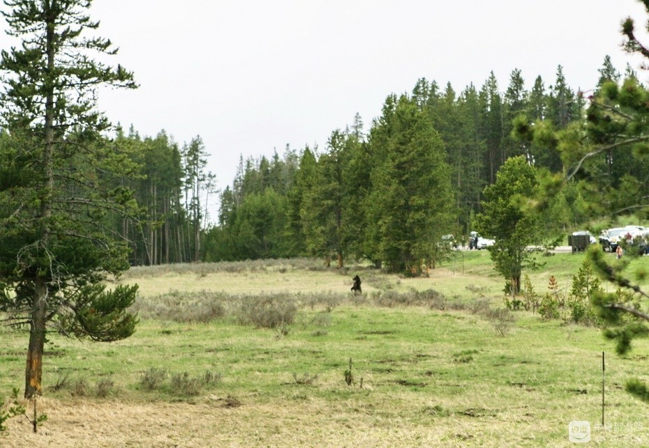 19、这只野熊距我们五六十米,可惜未带长焦,不能拉近。.jpg
