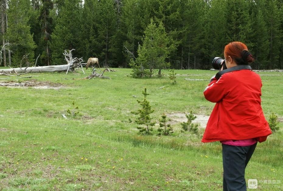 21、老伴儿在拍摄——相遇这样的食草动物,导游允许下车拍摄。.jpg