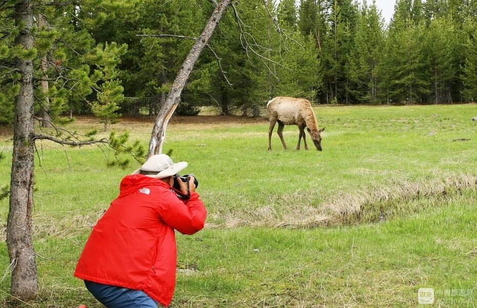 22、美国野生动物多不怕人,我距它七八米,它吃草依旧。.jpg