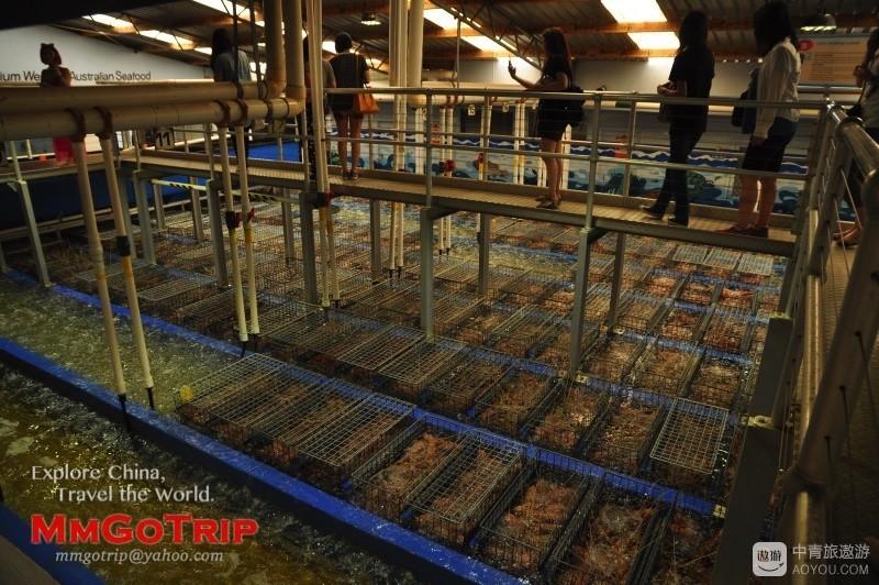 珀斯龙虾工厂DSC_2161.jpg