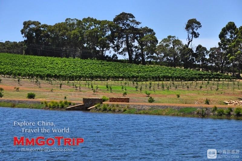 澳洲酒庄DSC_1432.jpg