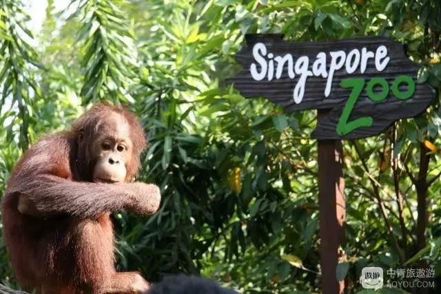 singapor2.jpg