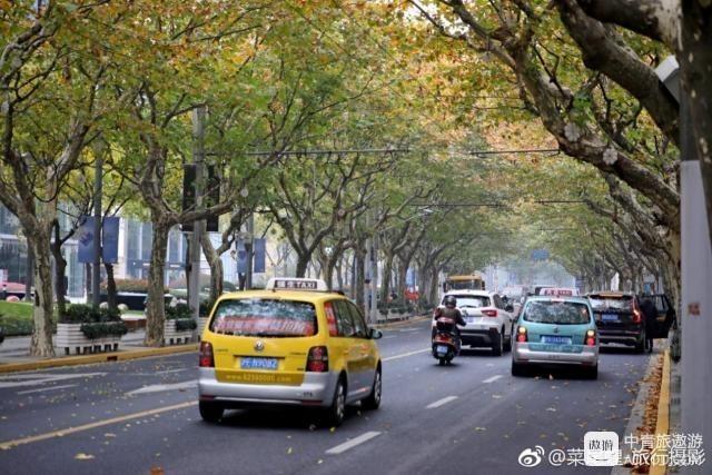 天气转冷,叶子凋零,十二月的上海格外宁静