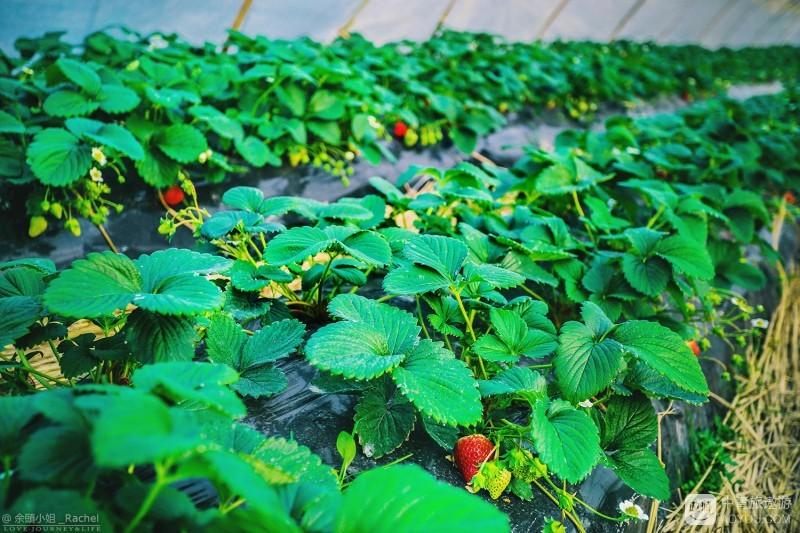 8 我家的园子 -8.jpg