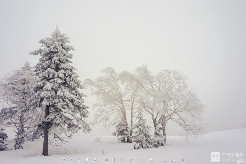 用镜头仰望大美凤凰山,漫山绽放雪绒花的雾凇世界