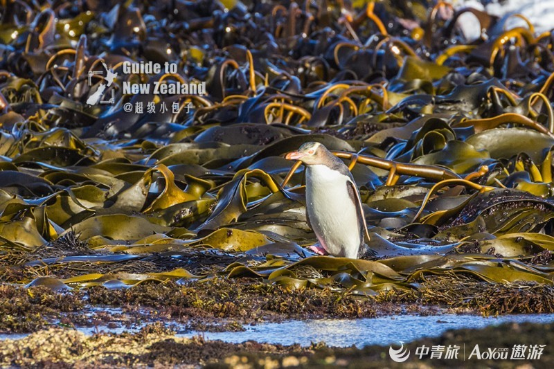 02一只登陆的企鹅.jpg
