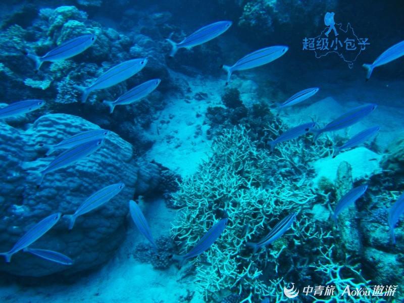06-激动人心的大堡礁探险之旅-珊瑚礁美景2.jpg