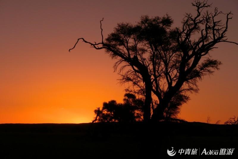 树木.jpg