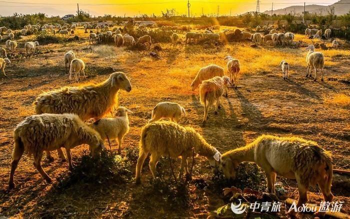 ningshunsheng7.jpg