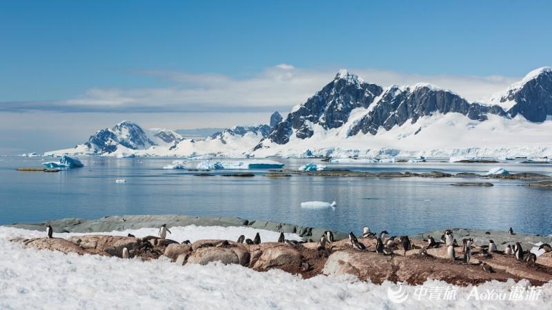 天堂湾登陆后,也有成群的企鹅等着我们