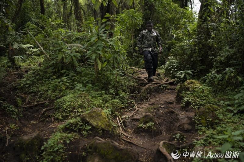 Rwanda_What_Can_Be_Saved_Gorillas_32110-1-1880x1254.jpg