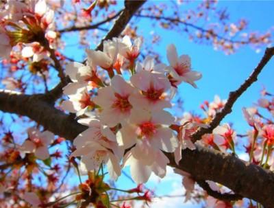 落樱缤纷季的东京,美食、购物、动漫一网打尽!