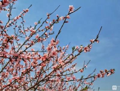 又是一年春游季,满山少女粉。