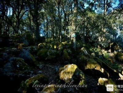 徒步在格萨拉原始森林听着悦耳的虫鸣鸟叫声