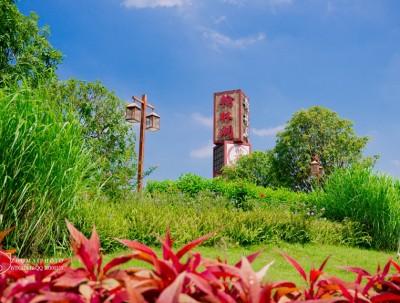 悠闲佛山 流连于数十亩醉蝶花、波斯菊中,来拍美照哦...