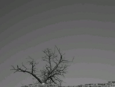 明城墙遗址公园梅花初绽