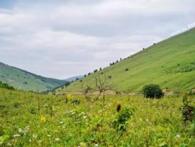 京北第一天路,北京最近的野趣草原,看牛马成群野花野草