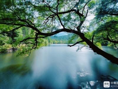镜泊湖:那一场穿越时空的爱恋,爱上这方原始的森林