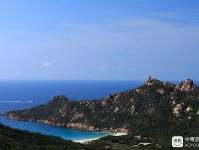 """法国科西嘉岛上那永不凋零的""""金色小太阳"""""""