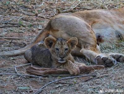 动物世界~肯尼亚