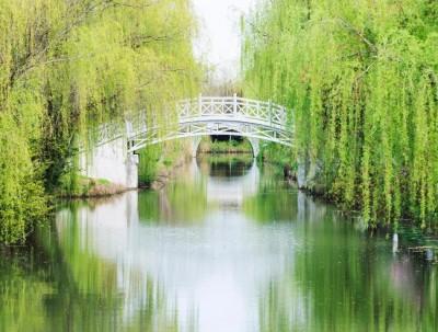 春光不负韶华,去同里国家湿地公园,洗心、洗肺、洗凡尘