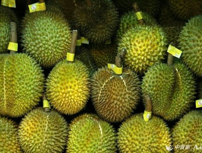 热带水果(第一篇榴莲)