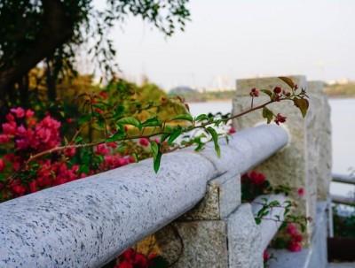 海珠湖丨广州春天踏春赏花的好去处
