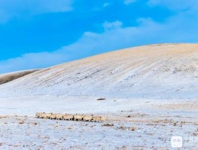 你见过给骆驼选美吗?到冬季草原那达慕大会上去找最美...
