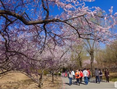 2016春夏秋冬伴京城