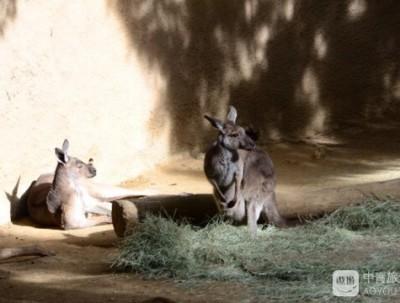 洛杉矶动物园看到好多没见过的动物