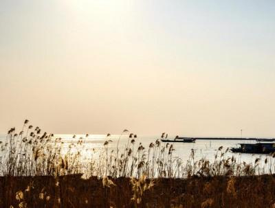 许你一场花事,去北太湖撩一个春天