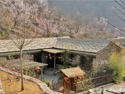 北京的一场雨雪之后,坡峰岭的山桃花你还好吗?