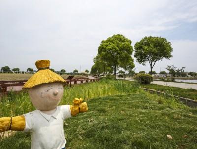 插秧季:稻香小镇里的诗画田园