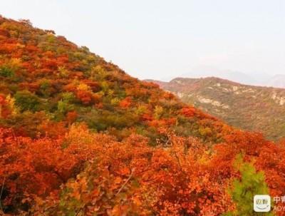 坡峰岭:京城红叶最美时~