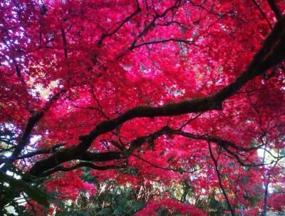 加拿大的秋色