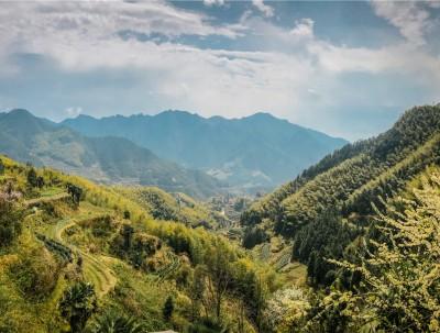 中国最美县城之一,位于浙江丽水,景美茶香曲动听