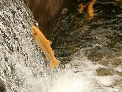 鱼跃龙门,我要去远游