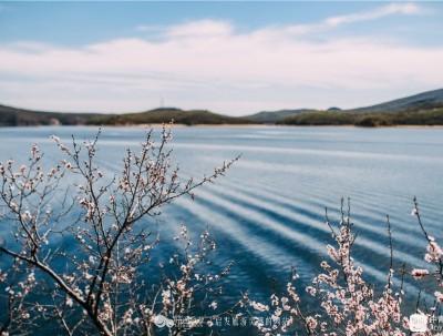 湖水杏花:水光潋滟,晴方好