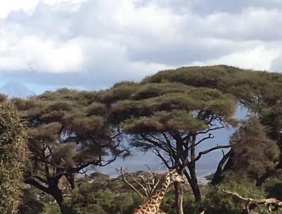 肯尼亚—马塞马拉
