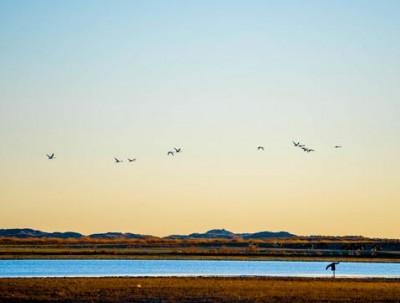 正蓝旗天鹅湖,遗落在这世间的最后一片净土,人类极少