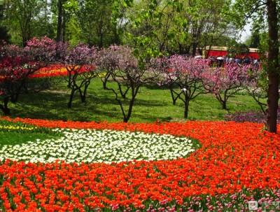 郁海花田 喷雾仙境#北京植物园踏青赏花