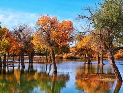 全球唯一沙漠世界地质公园:大漠胡杨林惊艳时光