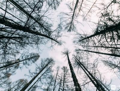 探秘地下森林:火山口森林公园、冰洞