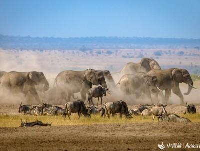肯尼亚的safari,摆脱钢铁森林,去看看这个世界本来的样子!