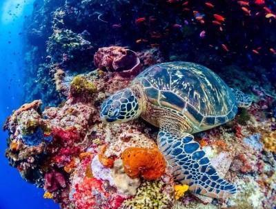 印尼美娜多:一生必到的潜水胜地,漂亮得不像实力派