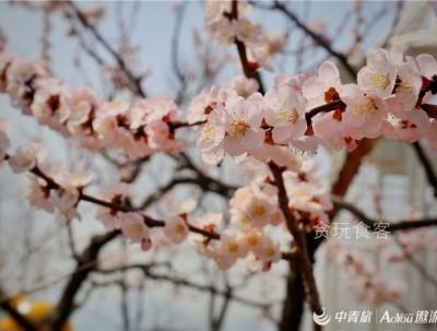 张裕爱斐堡,北京唯一的葡萄酒文化小镇及欧式亲子乐园