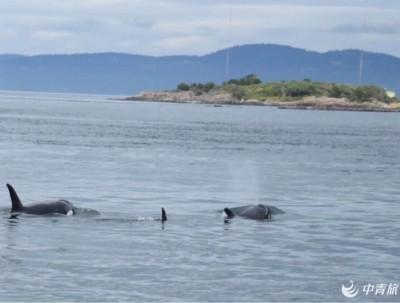 维多利亚出海观鲸